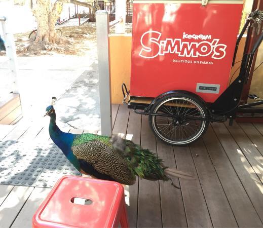 simmo-s-ice-cream bird